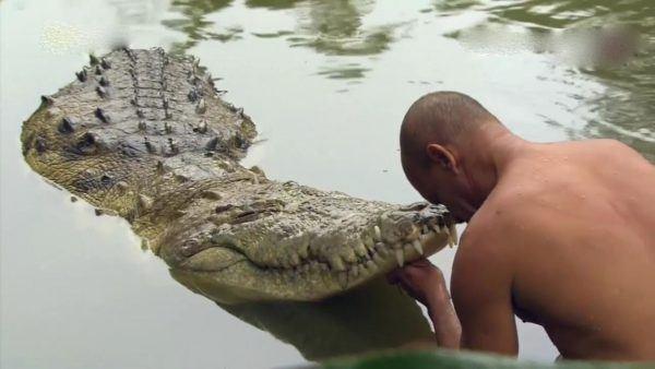 soñar-con-cocodrilos-significados-Soñar-que nadas con un cocodrilo