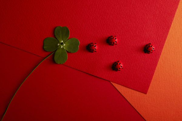 Como atraer la buena suerte mariquita