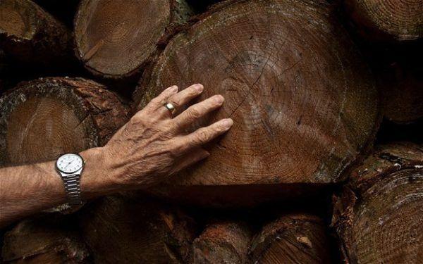 Por qu tocamos madera para tener buena suerte - Para tener buena suerte ...