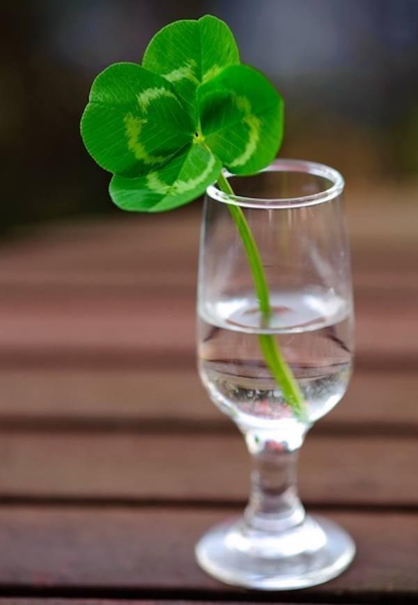 trebol-4-hojas-suerte-agua