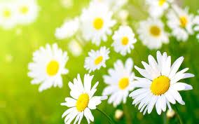 significado-sonar-flores