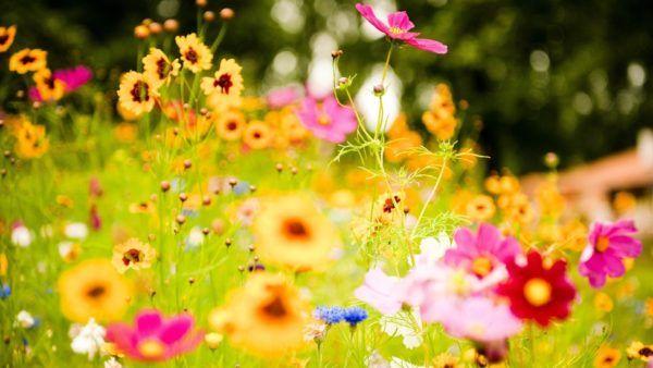 sonar-flores-en-un-jardin