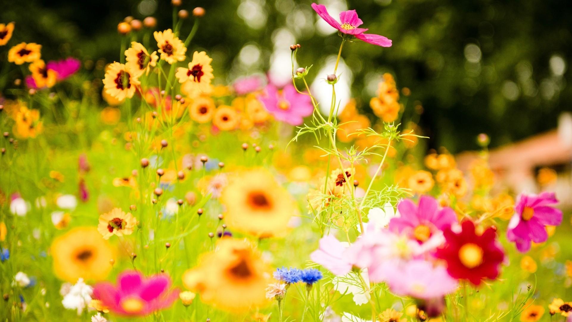 Las flores en sueños – Soñar con flores | Esoterismos.com - photo#50