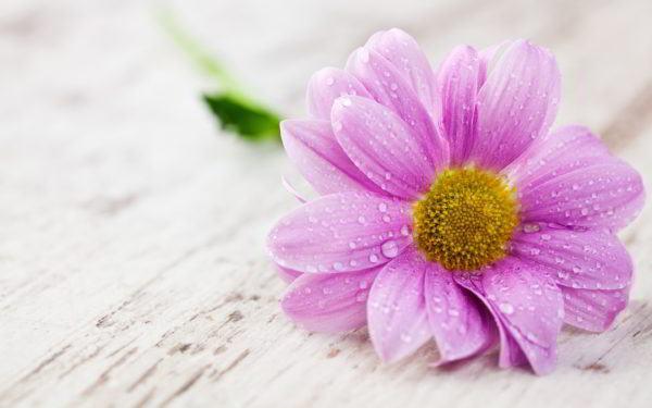 sonar-flores-frescas