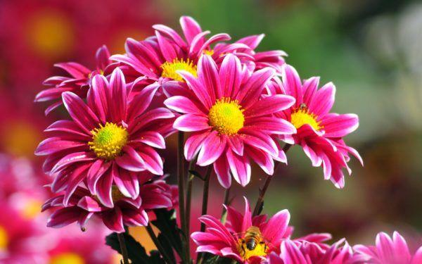 sonar-flores-significado