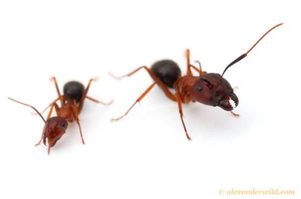 soñar-hormigas-matamos