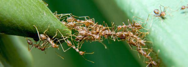 soñar-hormigas-nos-muerden