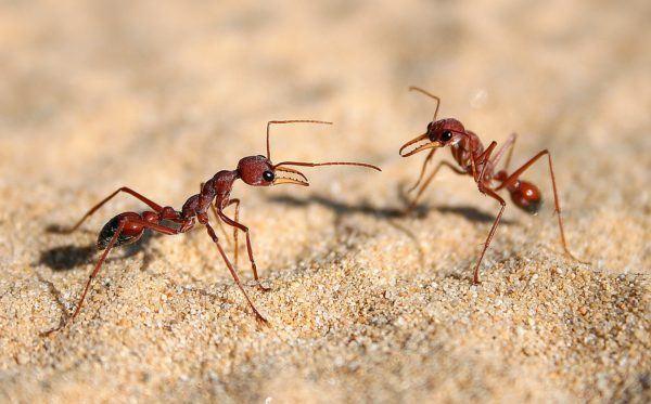 soñar-hormigas-significado