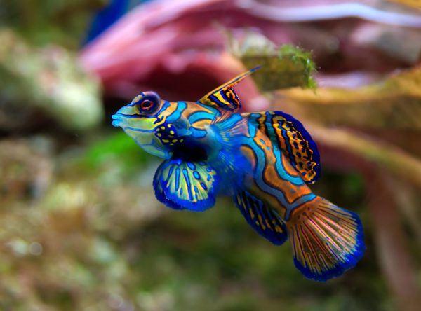 soñar-peces-que-vuelan