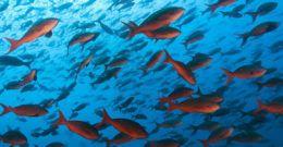 Qué significa soñar con peces o pescados