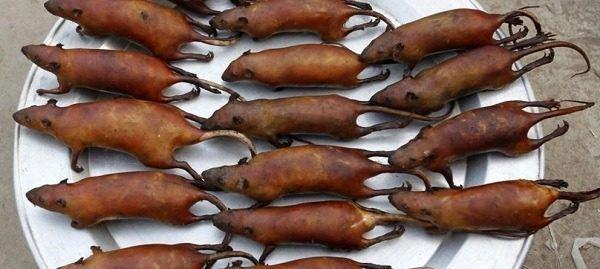 ratas-y-ratones-en-suenos-comer