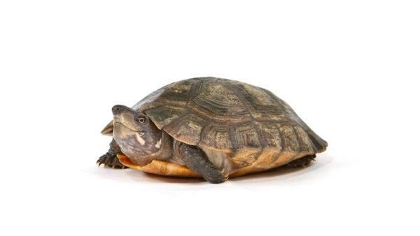 soñar-con-el-caparazon-de-una-tortuga