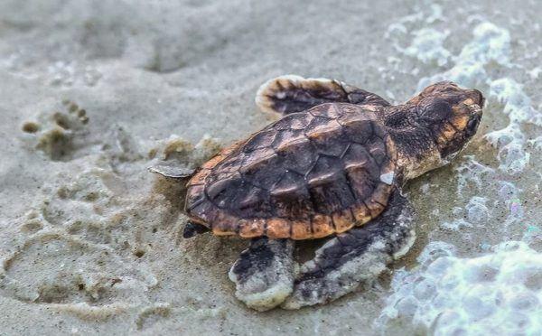 soñar-con-una-tortuga-en-el-agua