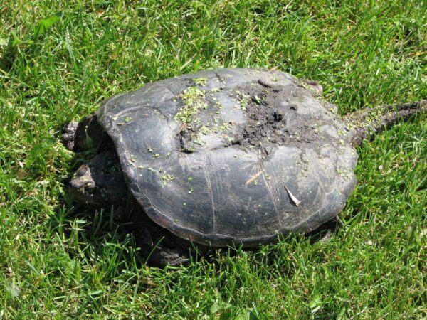 soñar-con-una-tortuga-tomando-el-sol