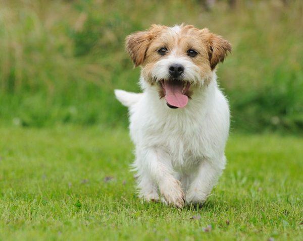 Perros en tus sue os - Es malo banar mucho a los perros ...
