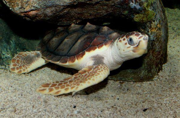 sueños-con-tortugas