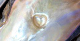 Madre perla – Propiedades, usos y significado