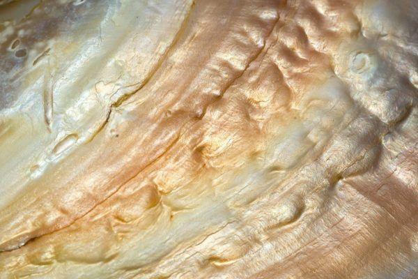 Madre perla dorada