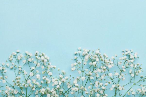 Significado del heliotropo flor
