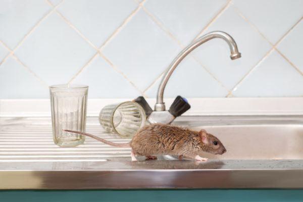 Que significa sonar con ratones