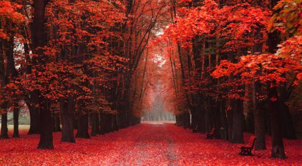 Que significado tiene y que transmite el color rojo