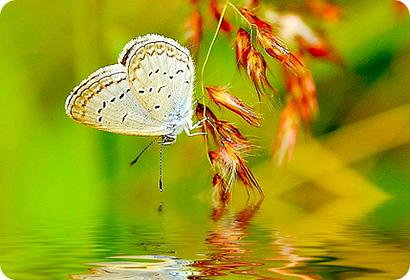 Simbolos Del Feng Shui Mariposas Para El Amor 2019