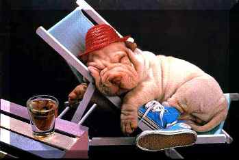 Perros en sueños